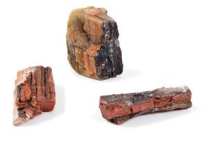 Real Petrified Wood