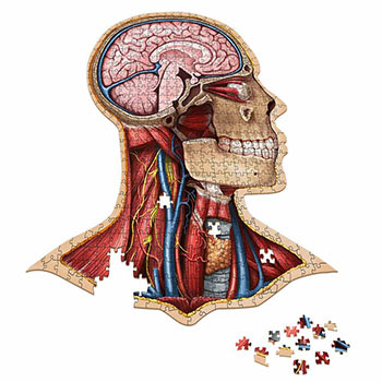 Dr. Livingston's Anatomy Jigsaw Puzzles - Anatomy Jigsaw Puzzle: Head