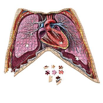 Anatomy Jigsaw Puzzle: Thorax