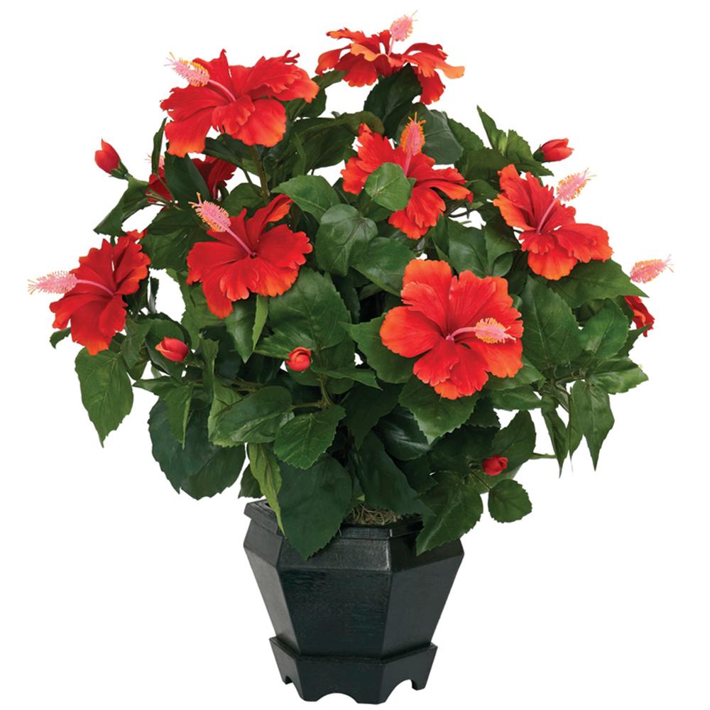 Hibiscus Silk Plant