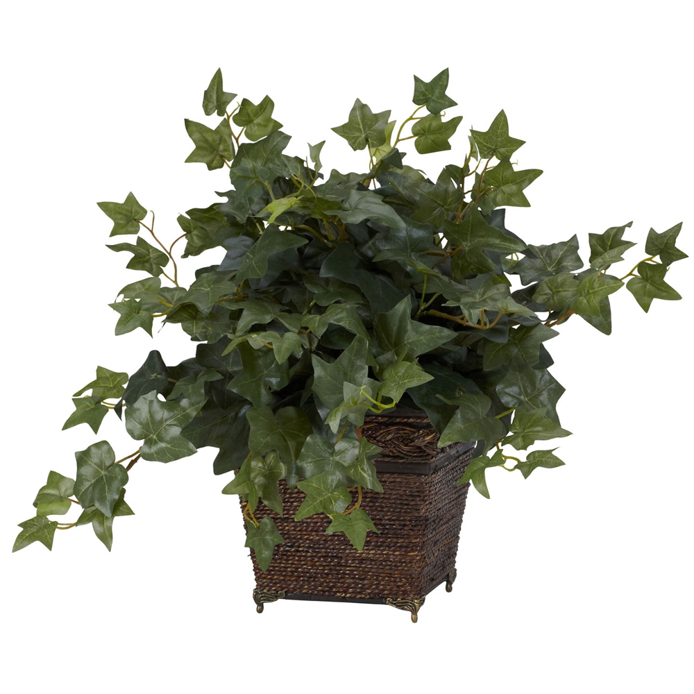 Puff Ivy with Coiled Rope Planter