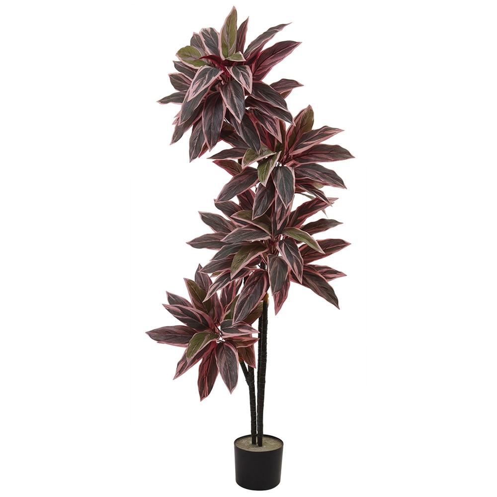 Caladium Silk Plant