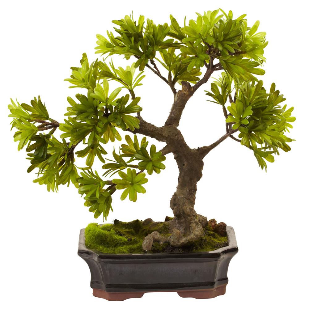 Podocarpus w / Mossed Bonsai Planter