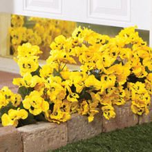 All-Weather Forever Blooms - Yellow Pansies