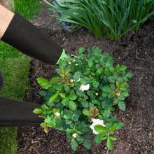 Pruning Gardening Gloves- Green-Large