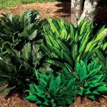 All-Weather Forever Plant - Hosta
