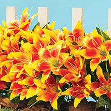 All-Weather Forever Blooms - Orange Lilies