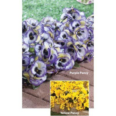 All-Weather Forever Blooms - Purple Pansies