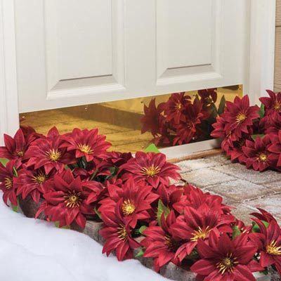 Poinsettia All-Weather Forever Blooms
