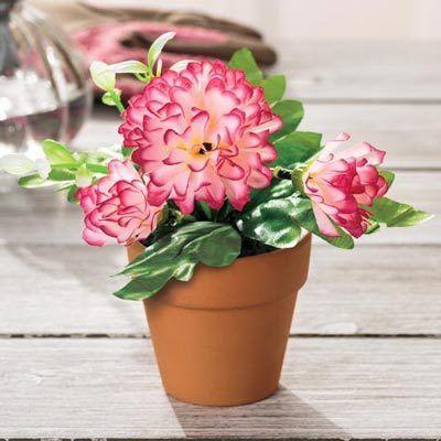 Pretty Posies - Carnation