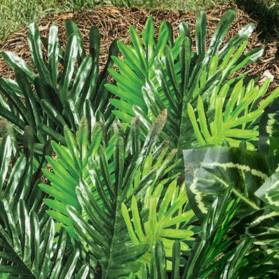 All-Weather Forever Plant - Sago Palm