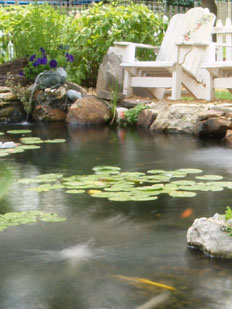 Picture of a water garden with a koi aeration system