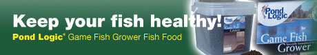 Keep your fish healthy!