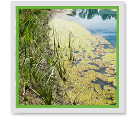 When Should I Start Treating Floating Algae In My Pond?
