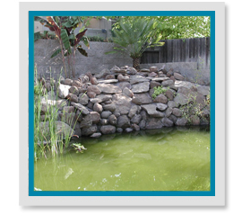 Why Does My Pond Water Turn Green?