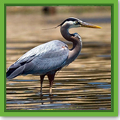 Will my heron decoy still be useful since it's getting cold out?