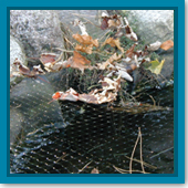 Can I leave netting over my pond during the winter months?