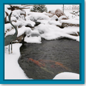 Do I need to watch the water levels in my pond during the winter?