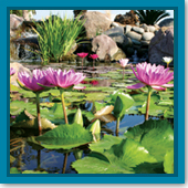 Why do I need aquatic plants in my water garden? When should I get them?