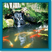 Do I have the right filtration system for my pond, or do I need to upgrade?