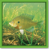 : My fish population is growing rapidly, but how do I know if my fish population is balanced?