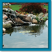 Q: I just installed a backyard water garden. How do I take care of it?