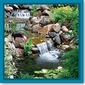 Q: How many plants do I need in my pond, and do I need to fertilize them?