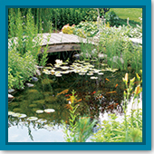 Q: What is the optimum water temperature for my pond, and when should I worry that it's too hot?