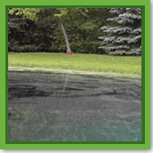 Q: How do I know if my pond is covered in pollen or algae?