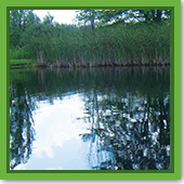 Q: When can I start treating my shoreline for new cattail growth?