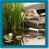 Q: I top off my pond for evaporation, so why do I need to do water changes?