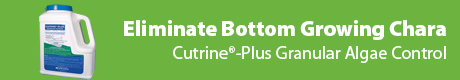 Eliminate Bottom Growing Chara - Cutrine®-Plus Granular