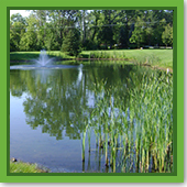 Q: Why can't I use lawn weed killers to clean up my pond's shoreline?
