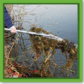 Q: I know a net won't fit on my pond, so how do I keep the leaves out?