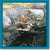 Q: Do I need to put a net over my pond?