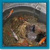 Q: I am bringing my fish inside for the winter. What do I need?