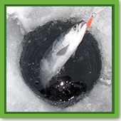 Q: I thought fish were dormant during the winter. So why do people ice fish?