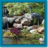 Q: We had a heron last year. How do I stop it from coming back?