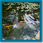 Q: How do I know if my filtration system is adequate for my pond?