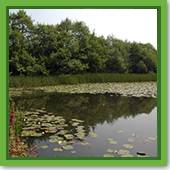 Q: I have a lot of water lilies in my 1/2 acre pond. How do I control them?