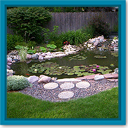 Q: Why does my water garden turn green and can I prevent it?