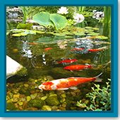 Q: Should I turn off my UV light when adding water treatments, like Nature's Defense®, to my pond?