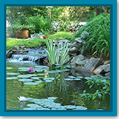 Q: Can you add too much beneficial bacteria to your pond?