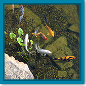 Q: Is fall a good time to add new fish to the pond?