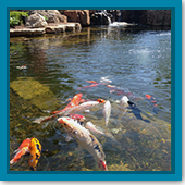 Q: I heard fish can get swim bladder disease this time of year, but what is it?