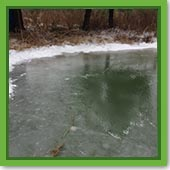 Q:How are algae able to grow in the winter when everything else is dormant?