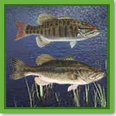 Q: I know bass are good predator fish to put in a pond, but does it matter if they are largemouth or smallmouth bass?