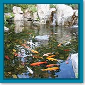 Q: Should I always add pond salt to my pond, or just when my fish are sick?