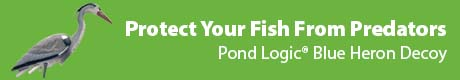 Protect Your Fish From Predators - Pond Logic® Blue Heron Decoy