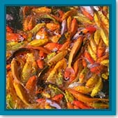 Q: How do I know how many fish I can have in my pond?